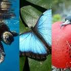 Encante-se com 30 imagens de parques ecológicos do Caribe