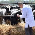 Manejo correto da vacinação eleva produtividade na pecuária