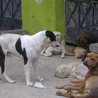 Tacna: acusan a sujeto de matar y calcinar a dos perros