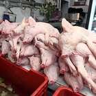 México colocaría hasta 200 mil toneladas de carne de cerdo