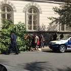 vc repórter: carro invade calçada e derruba árvore em SP