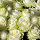 Ritual de rosas para atraer el amor a tu vida