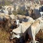 SP: carne bovina encarece e eleva custo de vida em 2014