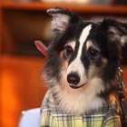 Terra estreia programa de pets com 'cãovidado' Fenômeno