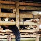 Policía captura miles de gatos en Vietnam