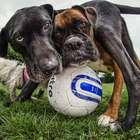 Estudo mostra que cachorros têm memória de 2 minutos