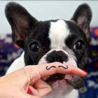 Programa de pets entrevista psicólogo canino nesta quarta