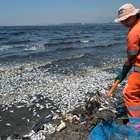 Miles de peces muertos aparecen en bahía de Brasil