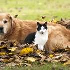 Cómo ayudar a combatir el maltrato animal