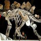 Por que o peso de um dinossauro importa para a ciência