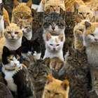 Video: Gatos dominan isla pesquera en Japón