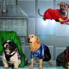 'The Avengers' regresan en una divertida versión canina