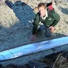 Peixe raro de 3 m é encontrado em pântano na Nova Zelândia