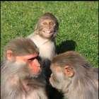'Photobomb' de mono macaco que 'sonríe' a la cámara
