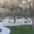 Video: Árbol cae sobre niños en parque de Massachusetts