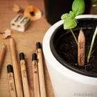 ¡Concurso! Terra y Sprout te invitan a que plantes tu lápiz