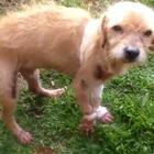 Cãozinho sobrevive após ser arrastado por 500 metros no RS