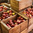 Washington tira 100 millones de dólares en manzanas