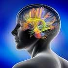 ¿Cómo forma el cerebro los recuerdos?