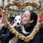 Personas gay no pueden adoptar perros, según animalistas