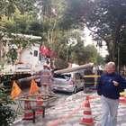 vc repórter: árvore e poste caem e bairro de SP fica sem luz
