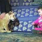 Leões viram bichos de estimação de família na Faixa de Gaza