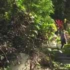 Depósito de lixo é transformado em jardim ecológico no Rio