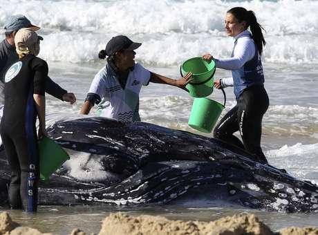 Baleia ficou encalhada por quase dois dias em praia australiana Foto: Jason O'Brien / Reuters