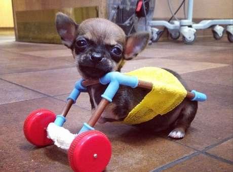 Filhote nasceu com essa deficiência e logo foi levado para a consulta de veterinários Foto: Instagram/turbo.roo / Reprodução