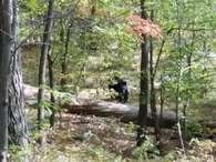Jovem tira foto de urso pouco antes de ser atacado e morto