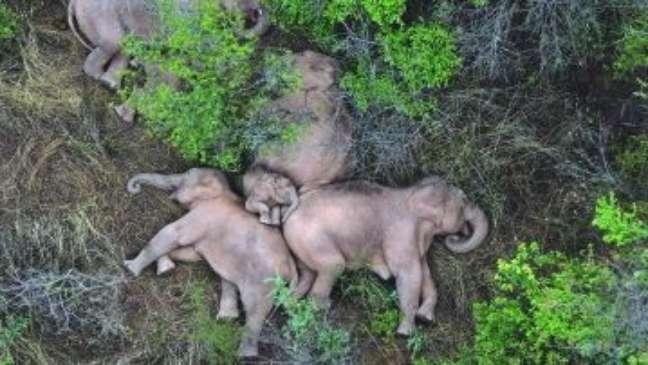Pausa na saga: a soneca dos elefantes que atravessam a China