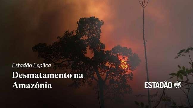 Entenda as consequências do desmatamento na Amazônia