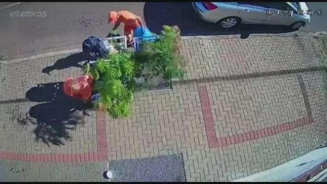 Coletor da limpeza quebra galhos de árvore para pegar lixo em Cascavel