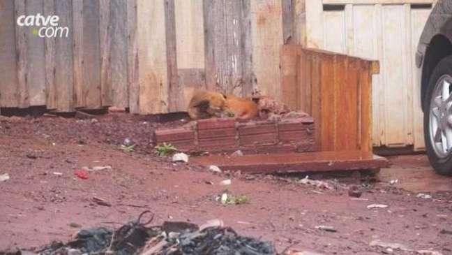 Infestação de carrapatos preocupa moradores do Jardim Veneza