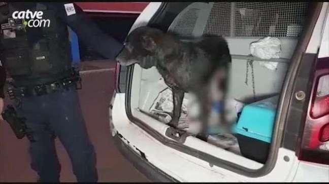 Homem é detido pela Guarda Municipal após esfaquear o próprio cachorro em Cascavel